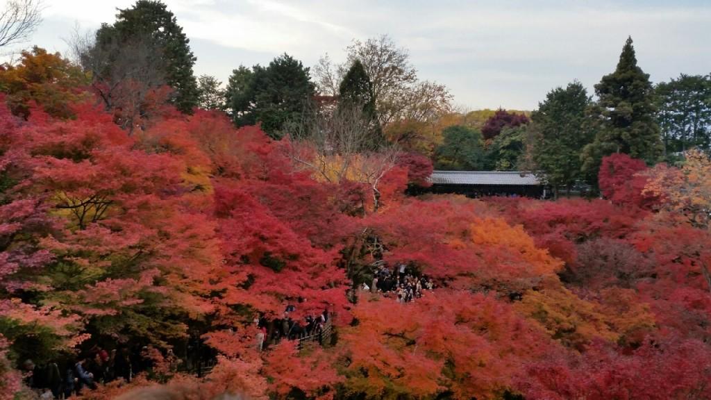 2014東福寺の紅葉2