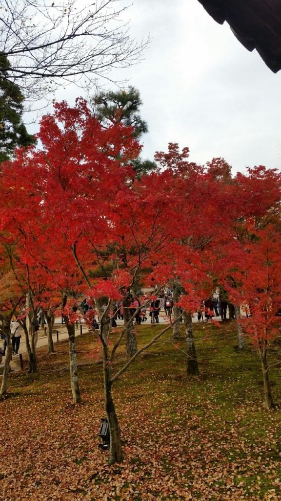 2014東福寺の紅葉3