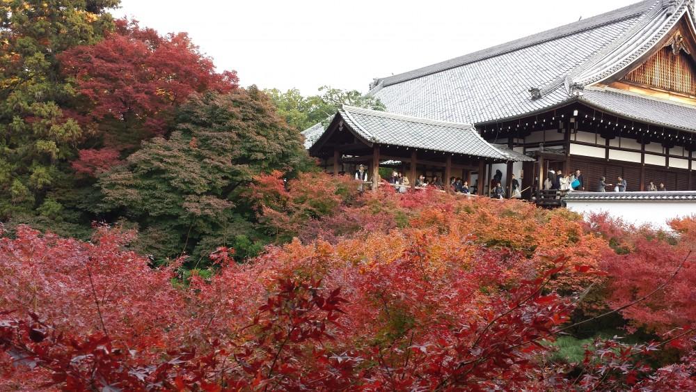 2014東福寺の紅葉1