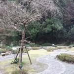 2015湯快リゾート白浜御苑中庭