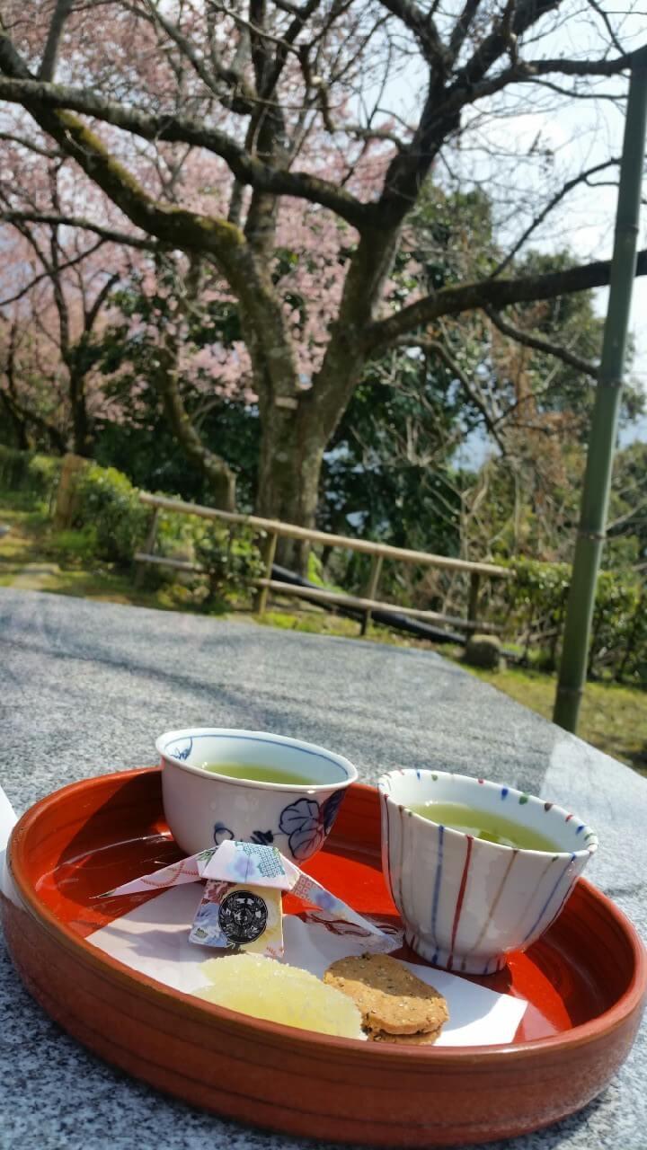 宇和島城での茶菓子