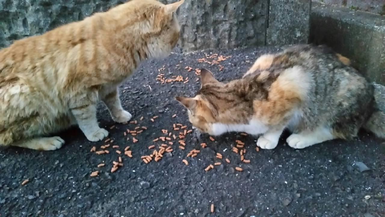 足摺岬の猫