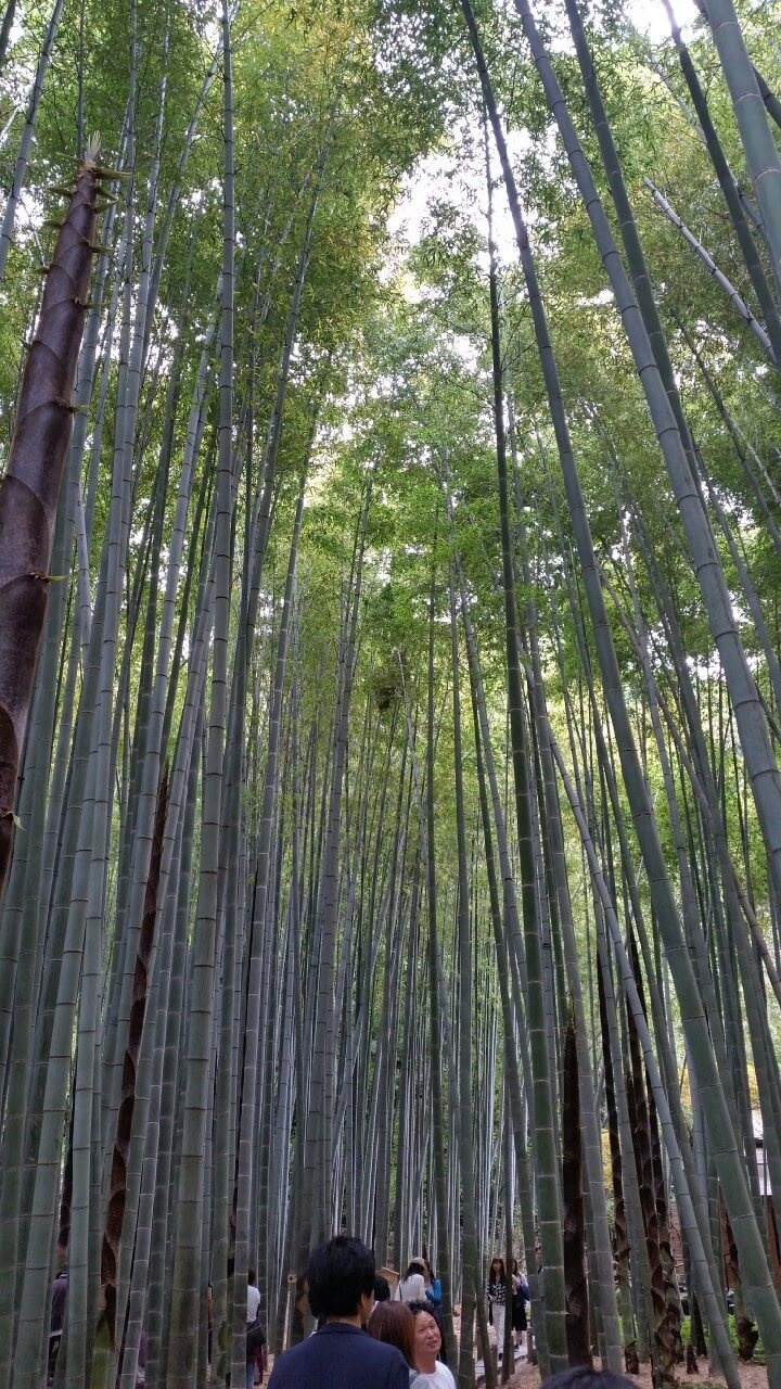 鎌倉_3017